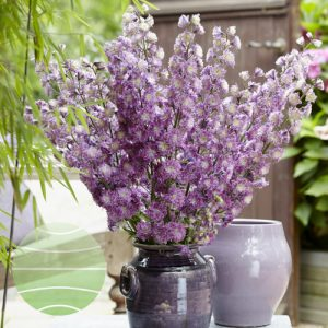 Walter Blom Plants Delphinium Highlander Flamenco