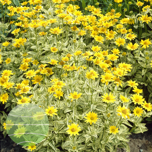 Walter Blom Plants
