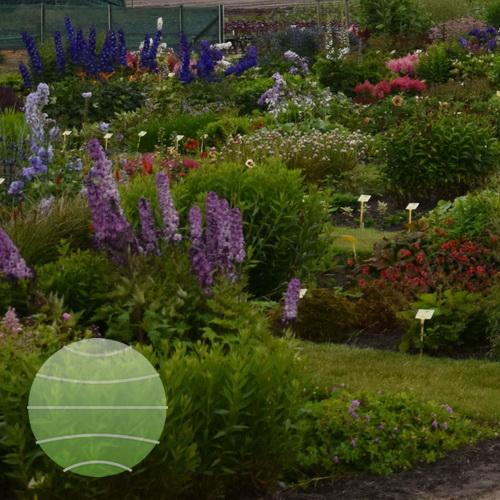 Our Trial garden